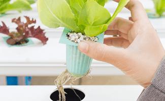 Pflanzen Vermehrung - Die optimale Vermehrung - stadtfarmer.eu